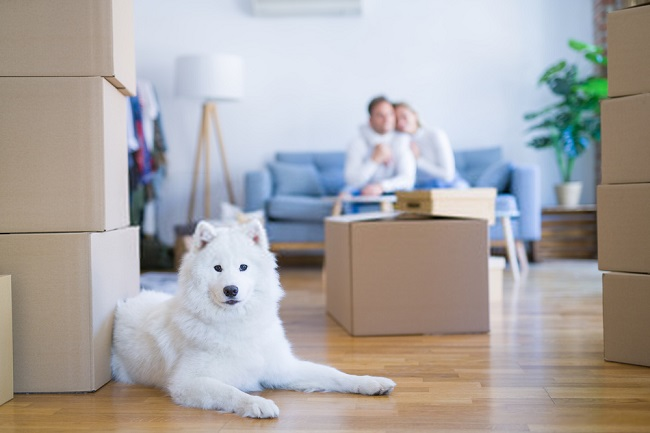 Best Moving Companies in Miami