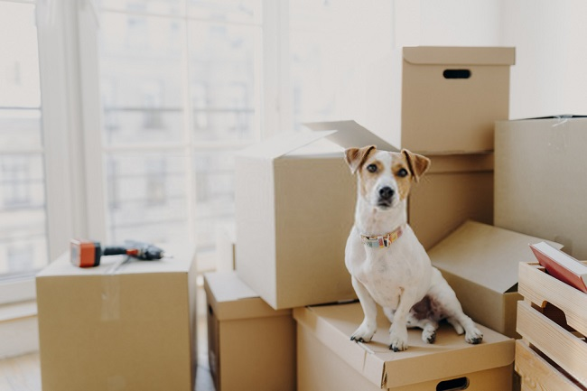 Moving Companies in South Florida